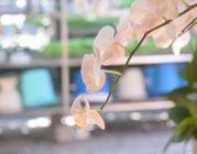 Ngày mồng 5 và mồng 6 Xuân Kỷ Hợi tại Viện Chuyên Tu