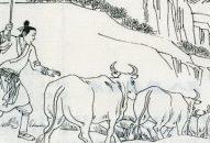 Chuyện 37 –Giết oan đàn trâu