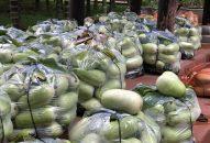 Cúng dường 3 tấn bầu đến Tăng Ni và hổ trợ bà con nghèo